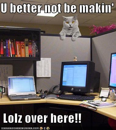 office funny cat